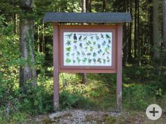 Auf der Schautafel am Waldlehrpfad sind einheimische Singvögel dargestellt.