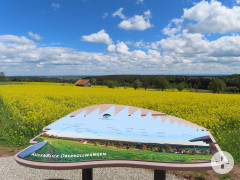 AugenBlick-Tafel Oberkollwangen und herrliche Fernsicht über ein gelb blühendes Rapsfeld