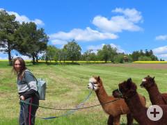 Wanderführerin mit drei Alpakas unterwegs