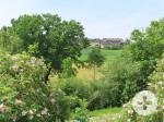 Blick durch blühende Wildrosensträucher auf das Landhotel Talblick