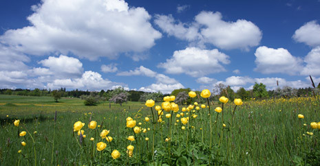 Blumenwiese und blauer Himmel mit großen weißen Wolken.